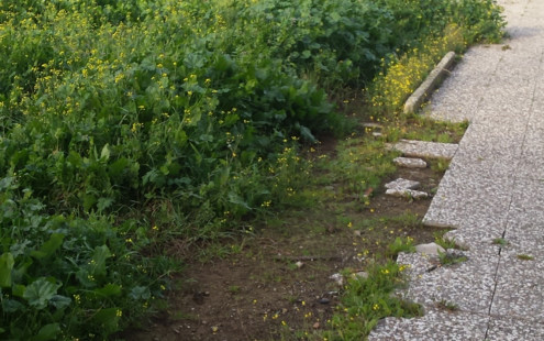 falta de acerados y mantenimiento en la Barriada de Tablada