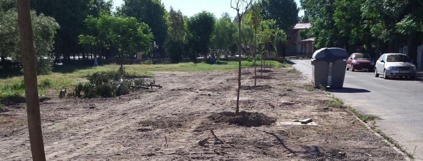 plantación de árboles en la barriada de tablada