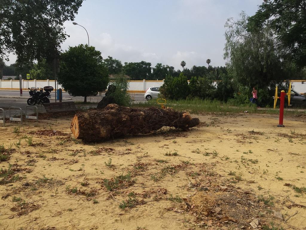 Restos de poda sin retirar Barriada de Tablada un mes después de la tala de árboles